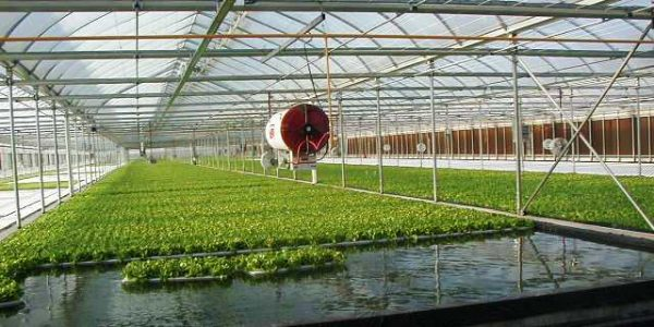Aquaponics-Floating-Raft-System.jpg